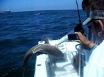 Shark Fishing Skills