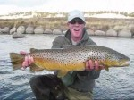 Understanding Brown Trout