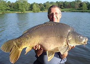 Proud angler with 17 kg Mirror Carp (Cyprinus ...