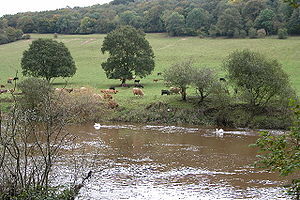 River Wye between Welsh Bicknor and Symonds Ya...
