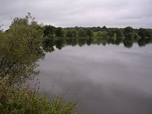 Whins Pond. Fishing lake for tench, carp, perc...