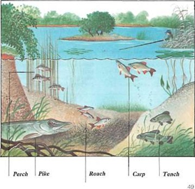 fish species in gravel pits