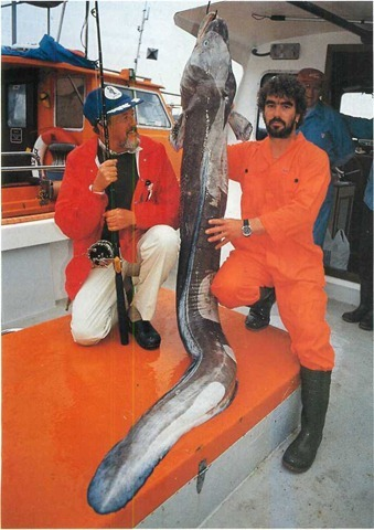 British boat- caught record conger