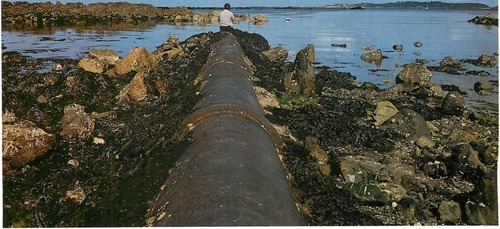 Outfall pipes thick- lipped mullet