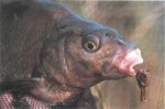 Coarse fish mouth shapes