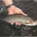 Fishing for grayling on the River Dee 011