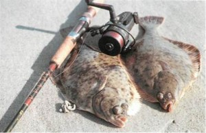 Flatfish which side up