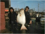 Giant halibut
