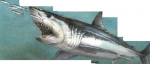 The mako shark – a fast and hungry fish