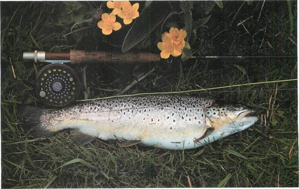 trout in the (0.45-1.1kg) weight range