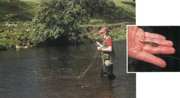 Fly Fishing on the River Wharfe