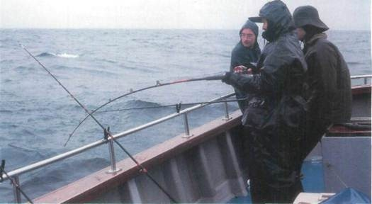 fighting whiting on mackerel strip